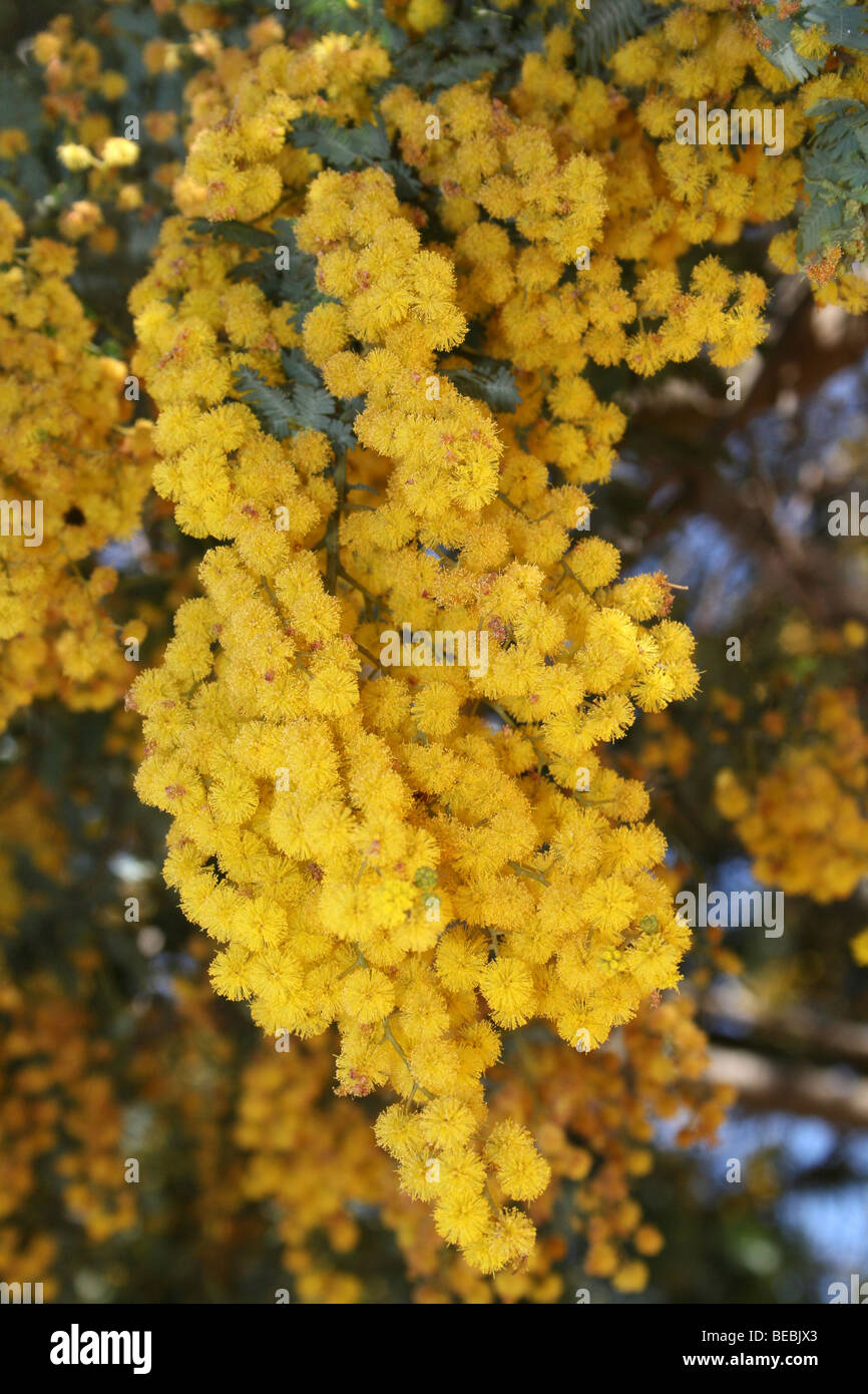 South African Native Flowers High Resolution Stock Photography And Images Alamy