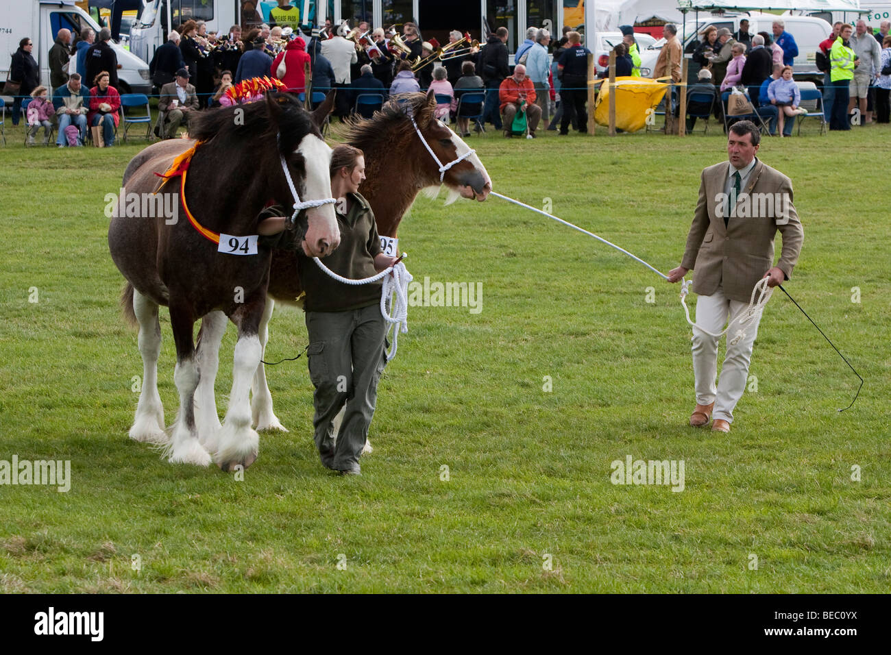 Cart Horses, Wensleydale Agrcultural Show held early September near Leyburn, North Yorkshire - Stock Image