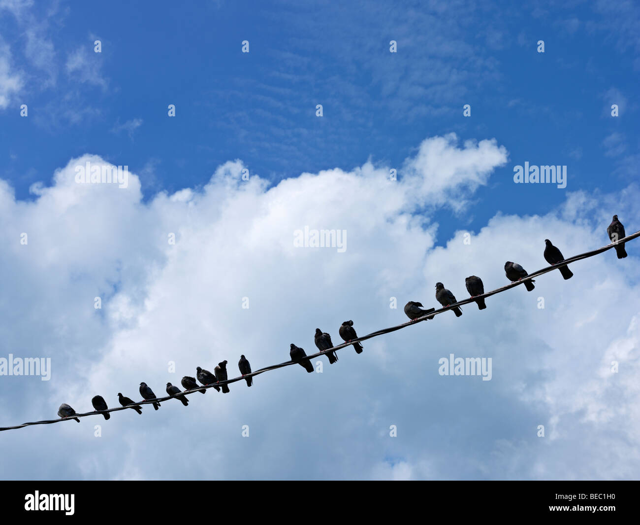 row of birds on a wire against a blue sky and white clouds - Stock Image
