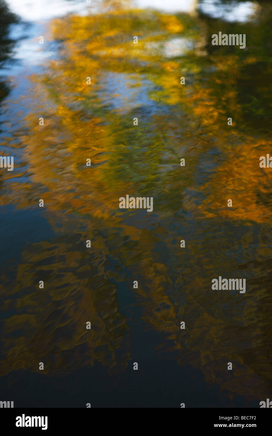 Long exposure image of trees reflected in water. - Stock Image