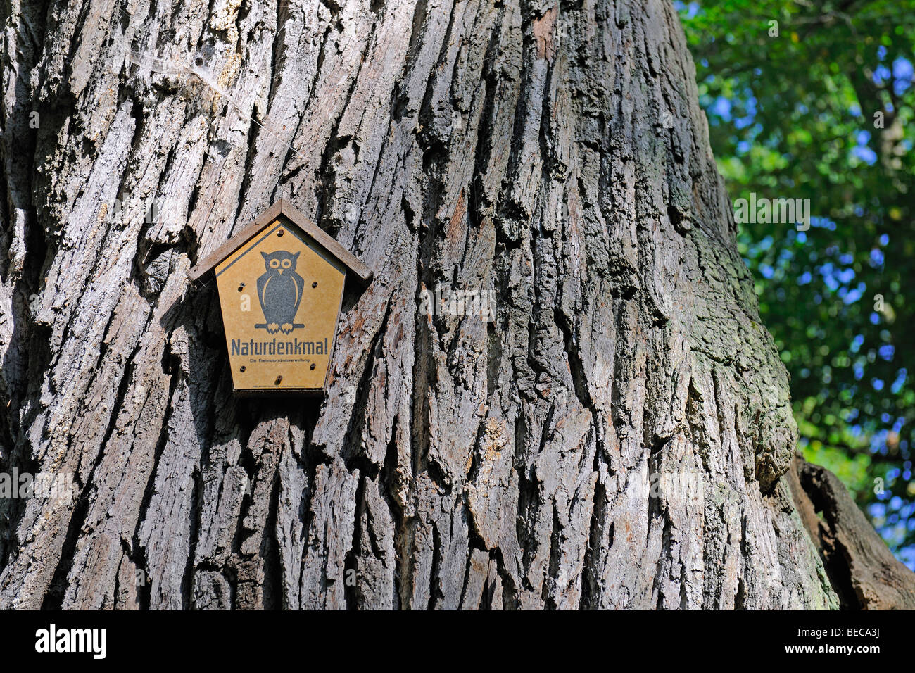 Sign indicating a natural monument, on an approximately 800 years old Oak (Quercus), Maerkische Schweiz Nature Park, - Stock Image