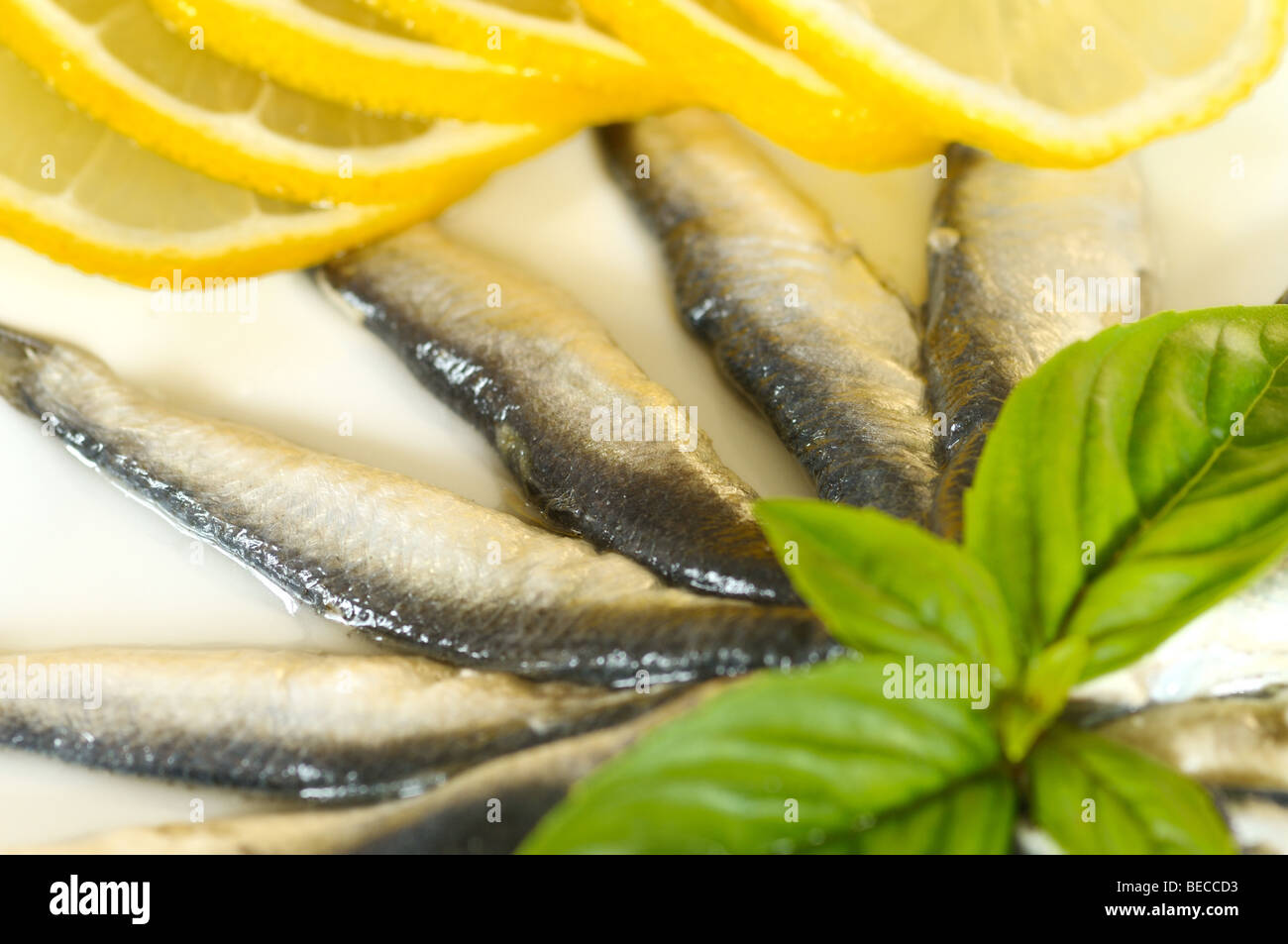 Salad made of marinated sprats - Stock Image