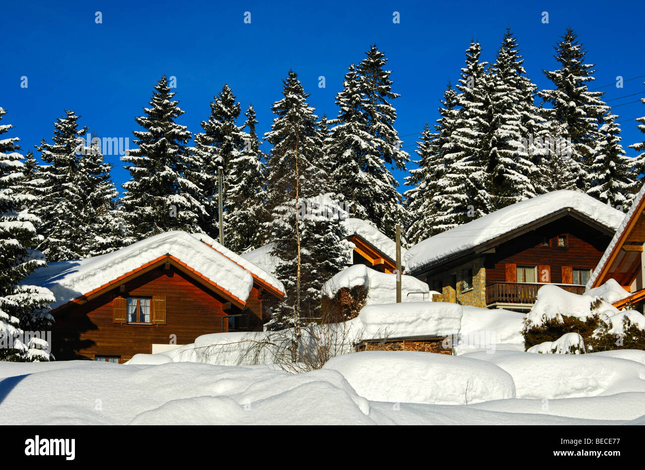 Snow-covered block houses on the edge of a forest, Jura, Switzerland - Stock Image