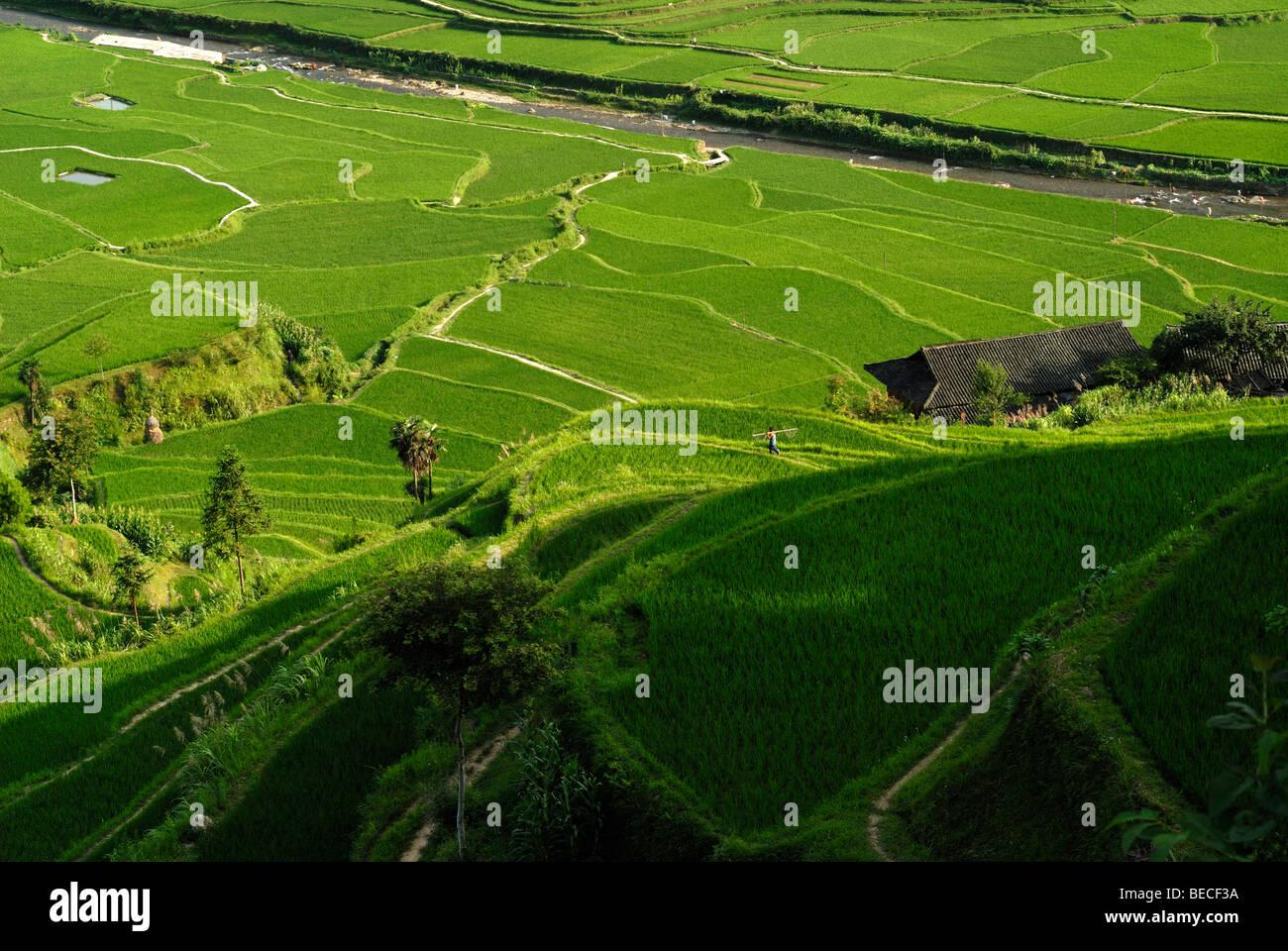 Rice terraces and village of the Miao Minority, Xijiang, Guizhou, Southern China - Stock Image