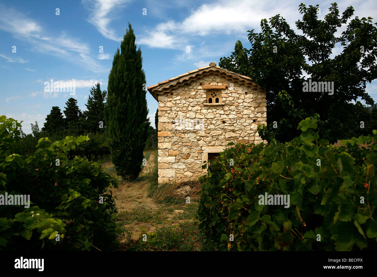Agricultural building in a vineyard, France, Europe - Stock Image
