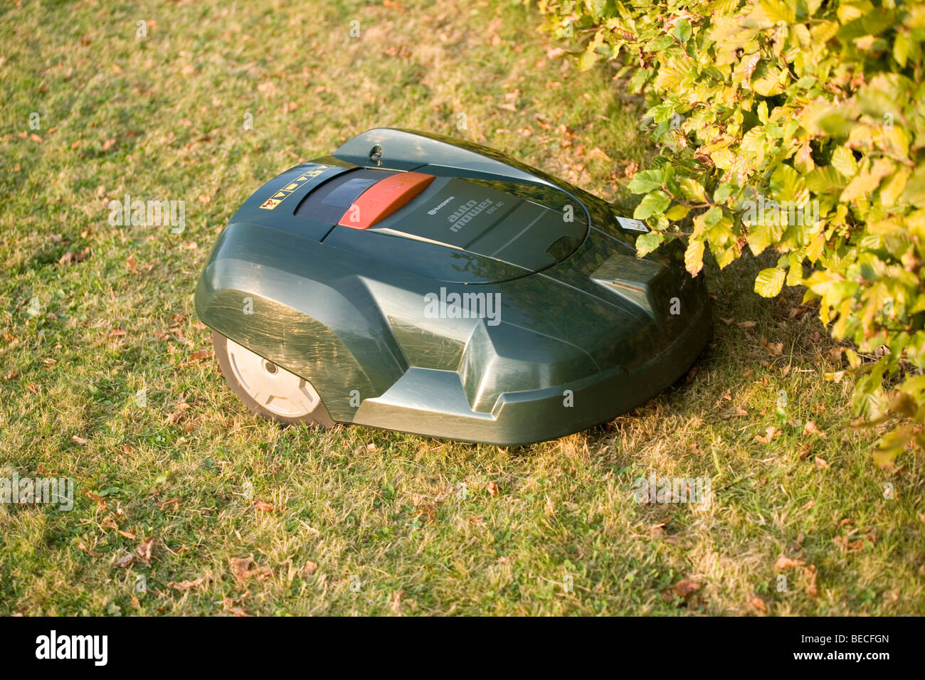 Automatic robot lawn mower cutting grass and running into a hedge - Stock Image