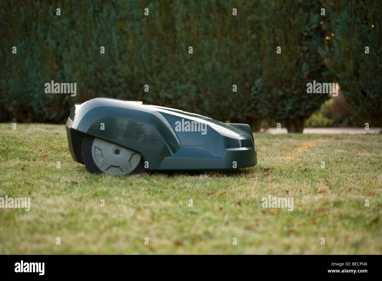 Side view of a green automatic robot lawnmower cutting grass in front of a green hedge - Stock Image