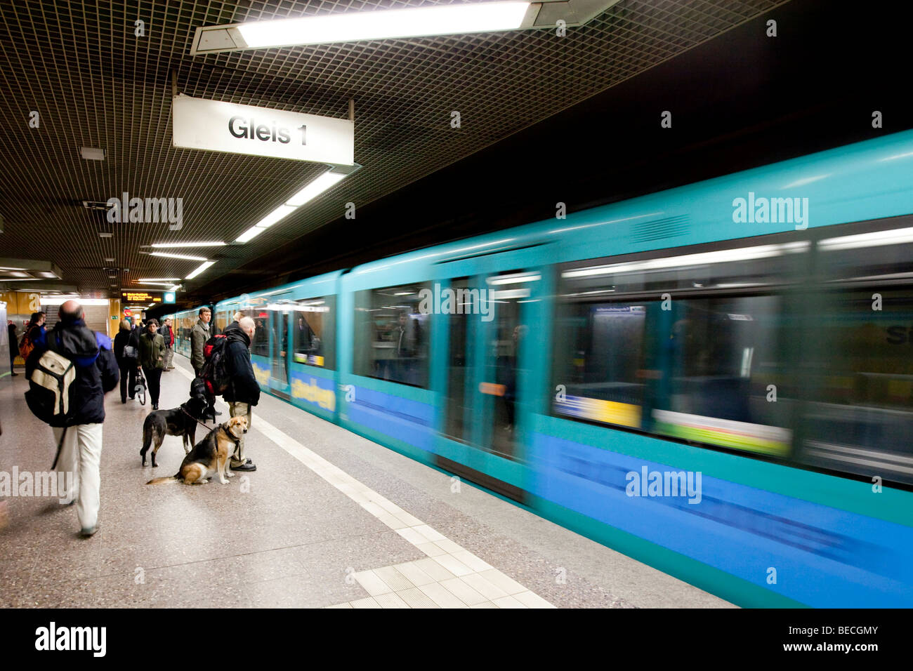 Commuters waiting for the subway pulling in, Frankfurt, Hesse, Germany, Europe Stock Photo