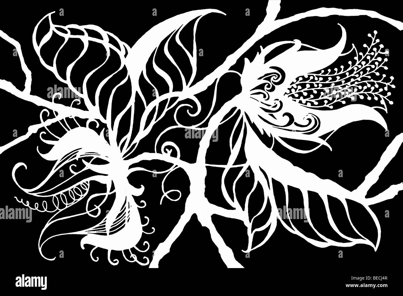 Repeatable white on black drawing of exotic and fanciful botanical blossoms, leaves and stems in a silhouetted design - Stock Image