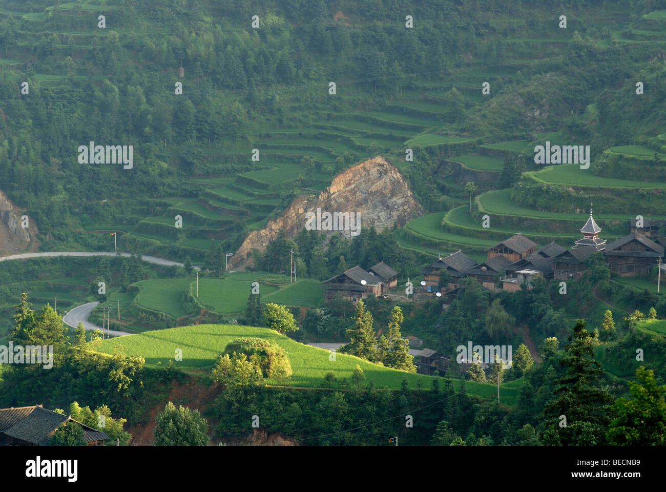Rice terraces, Tang An village of the Dong minority, Guizhou, China, Asia - Stock Image
