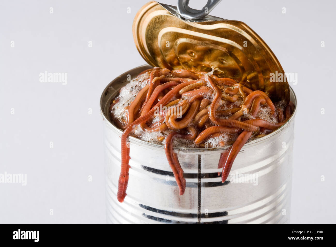Opening a can of worms. - Stock Image