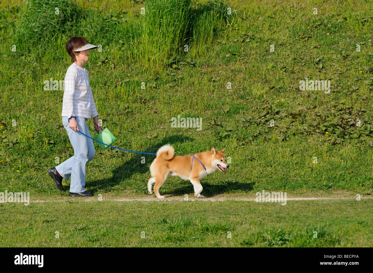 Dog handler with poo bag walking a Shiba, Japanese dog breed, at the Kamo river, Kyoto, japan, Asia - Stock Image