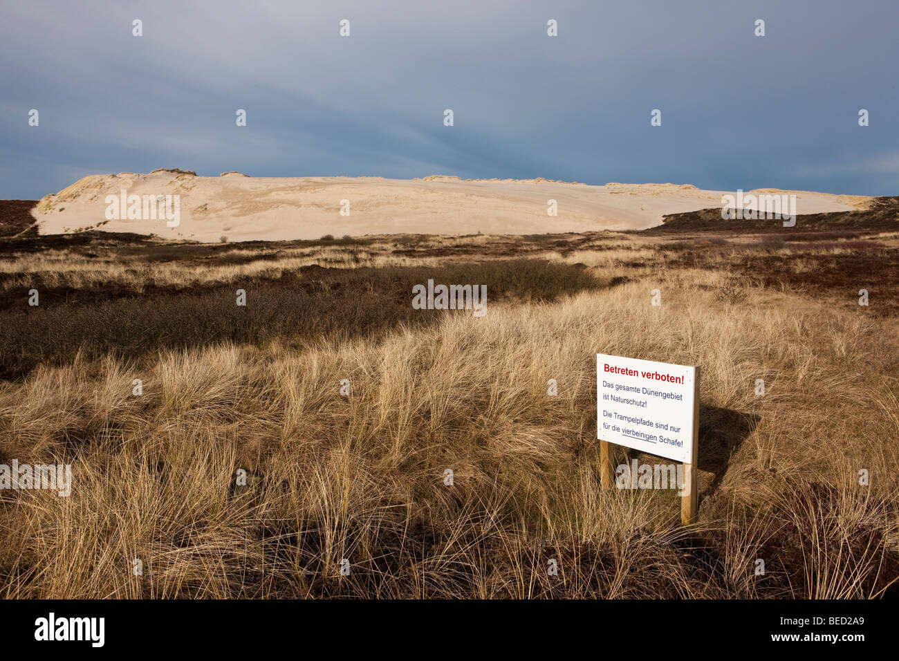 Shifting dunes near List, No Entry sign, Sylt Island, North Frisian Islands, Schleswig-Holstein, Germany, Europe - Stock Image