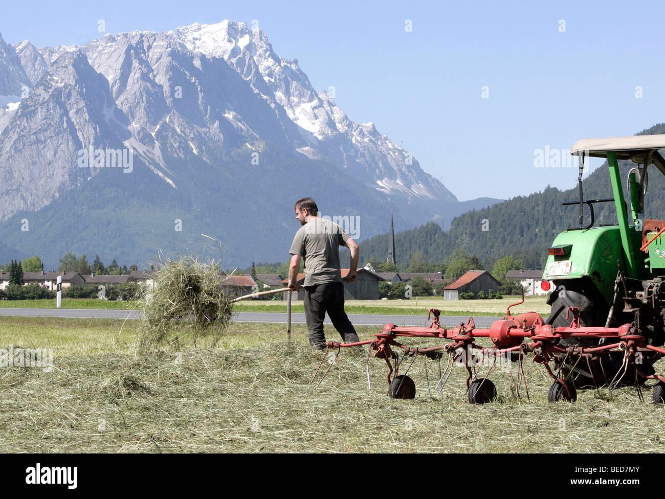 Farmer turning the hay on a field by hand, in front of the Wetterstein Range with Mt Zugspitze, near Garmisch-Partenkirchen, Stock Photo