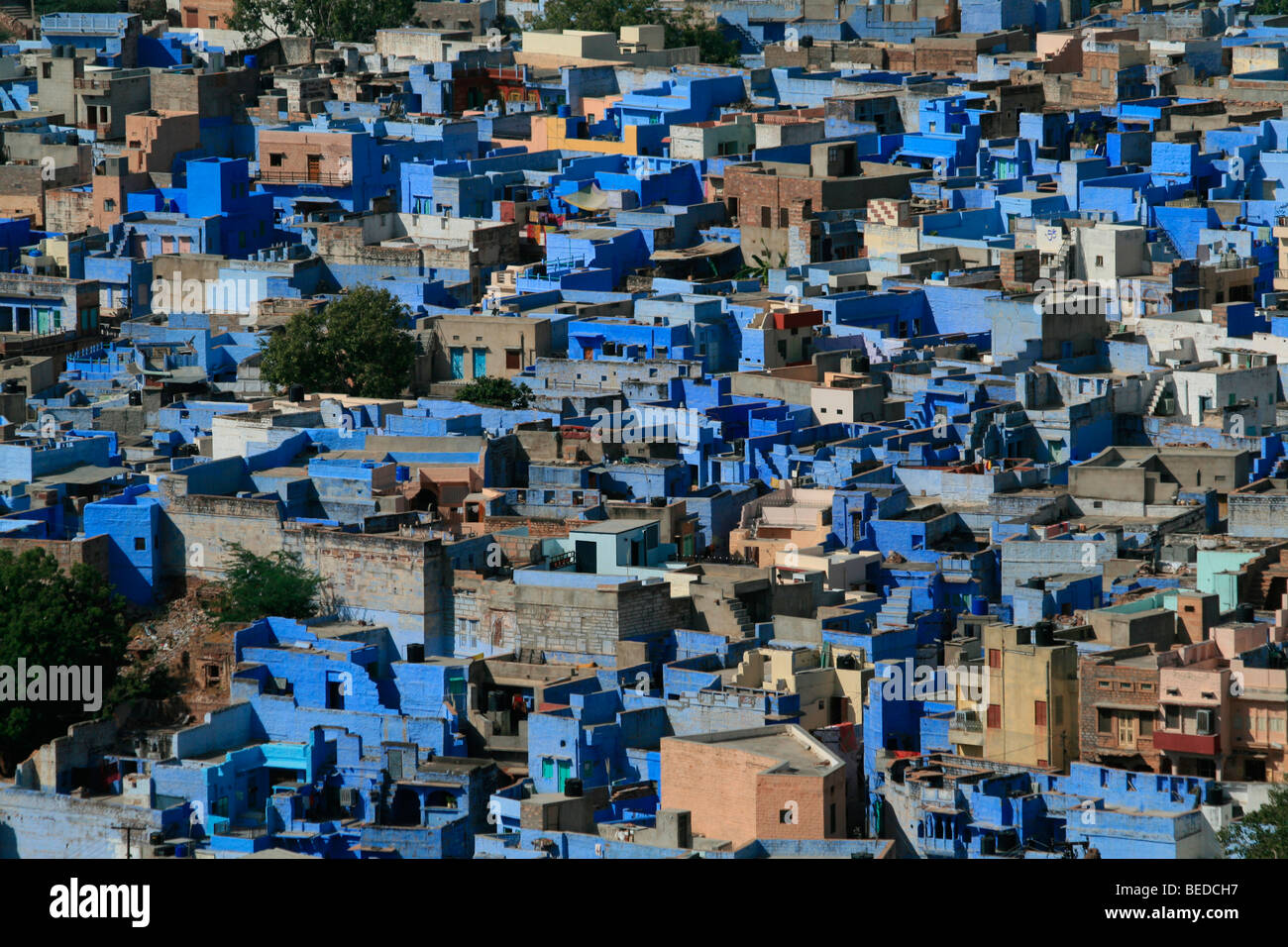 Blue city, Jodhpur, India, South Asia Stock Photo