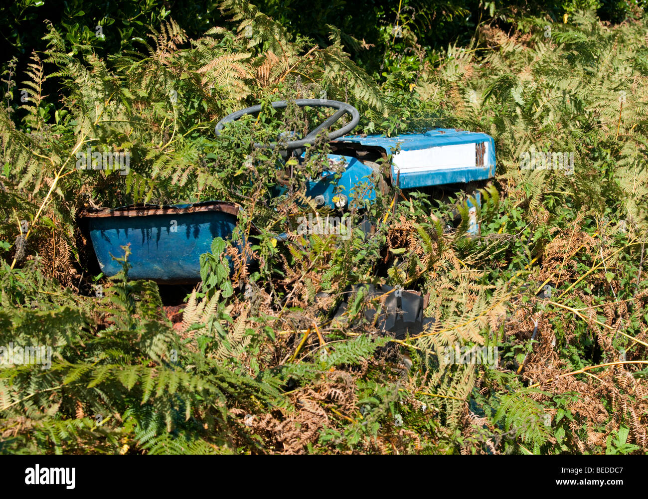 An abandoned tractor in undergrowth on St. Martin's, Isles of Scilly Stock Photo