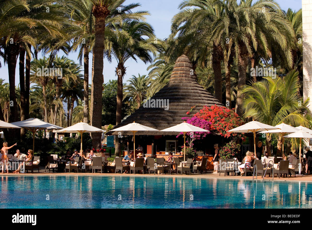 Swimming pool in a palm garden, Design Hotel Palm Beach, Grand Stock ...