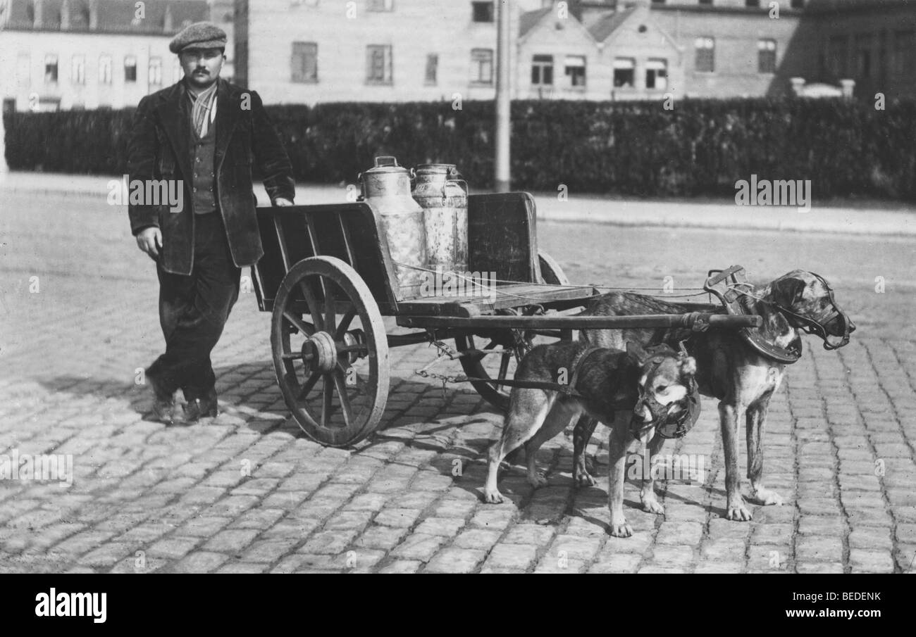Historic photograph, dogs pulling a milk wagon, around 1912 - Stock Image