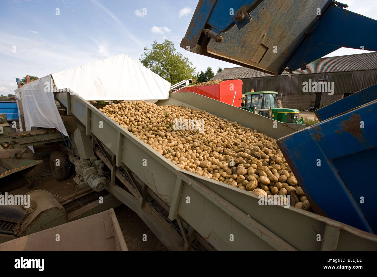 Grading Potatoes In Lincolnshire - Stock Image