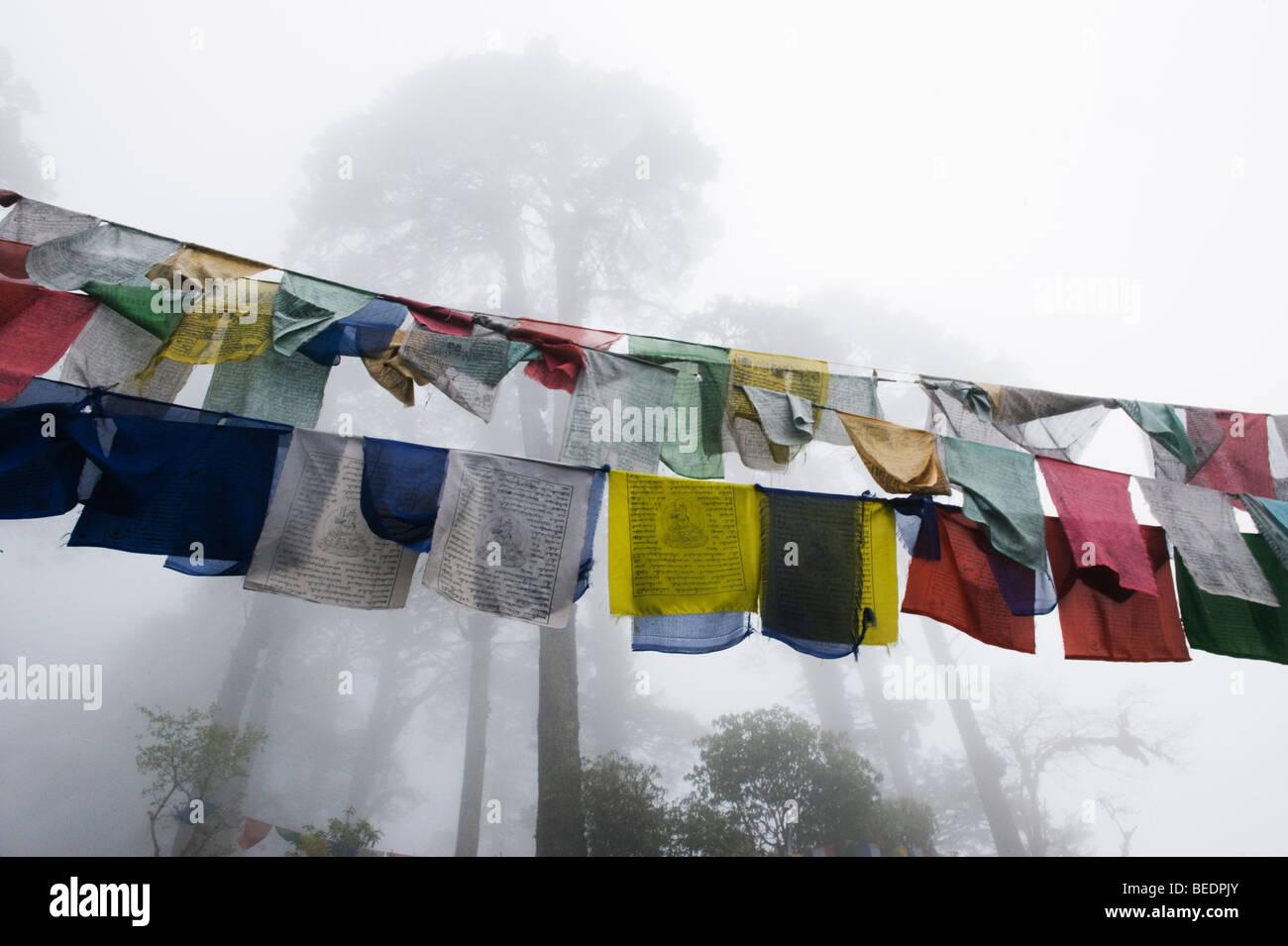 Prayer Flags in fog beneath tall Fir trees, Dochu La Pass, ca. 10,000 feet, BHUTAN - Stock Image
