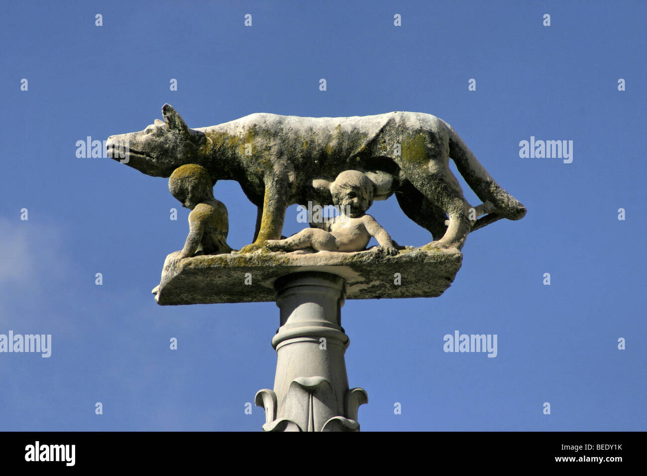 Sculpture of wolfe with Romulus and Remus on column in Siena, Tuscany, Italy, close-up, Symbol of Rome - Stock Image
