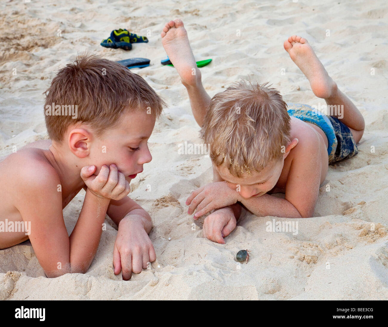Two boys 5 and 6 years old watching a hermit crab on the beach - Stock Image