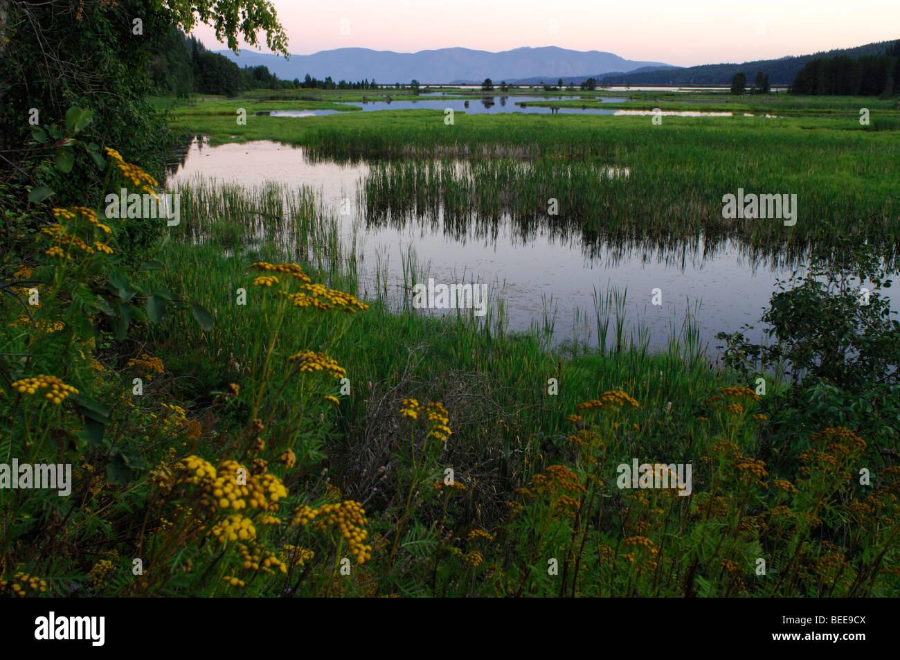 Marsh, wetland - Stock Image