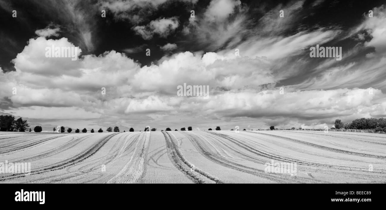 Harvested wheat field in the English countryside. Panoramic. Black and White - Stock Image