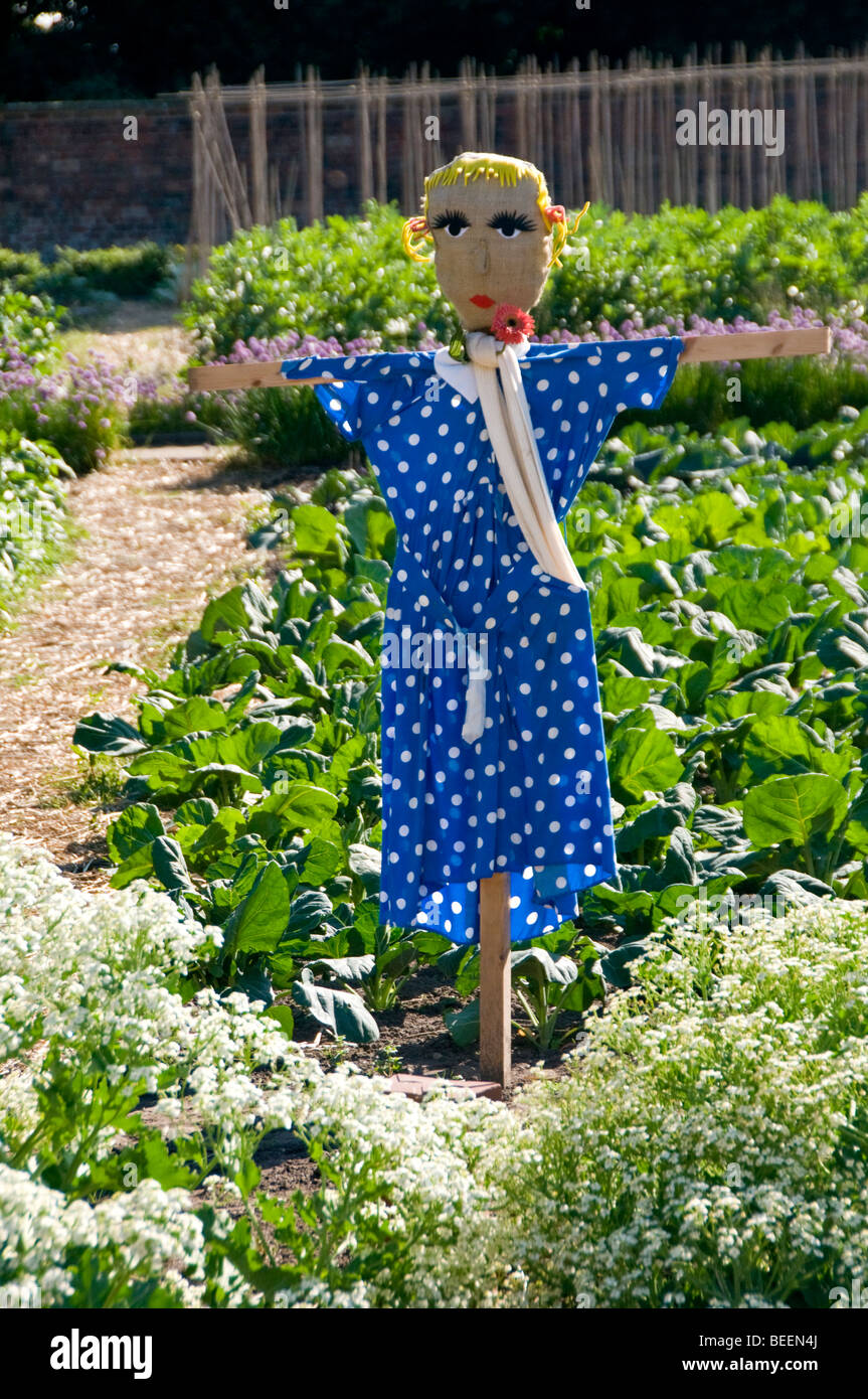 Colourful Scarecrow Standing in Vegetable Patch, Cheshire, England, UK - Stock Image