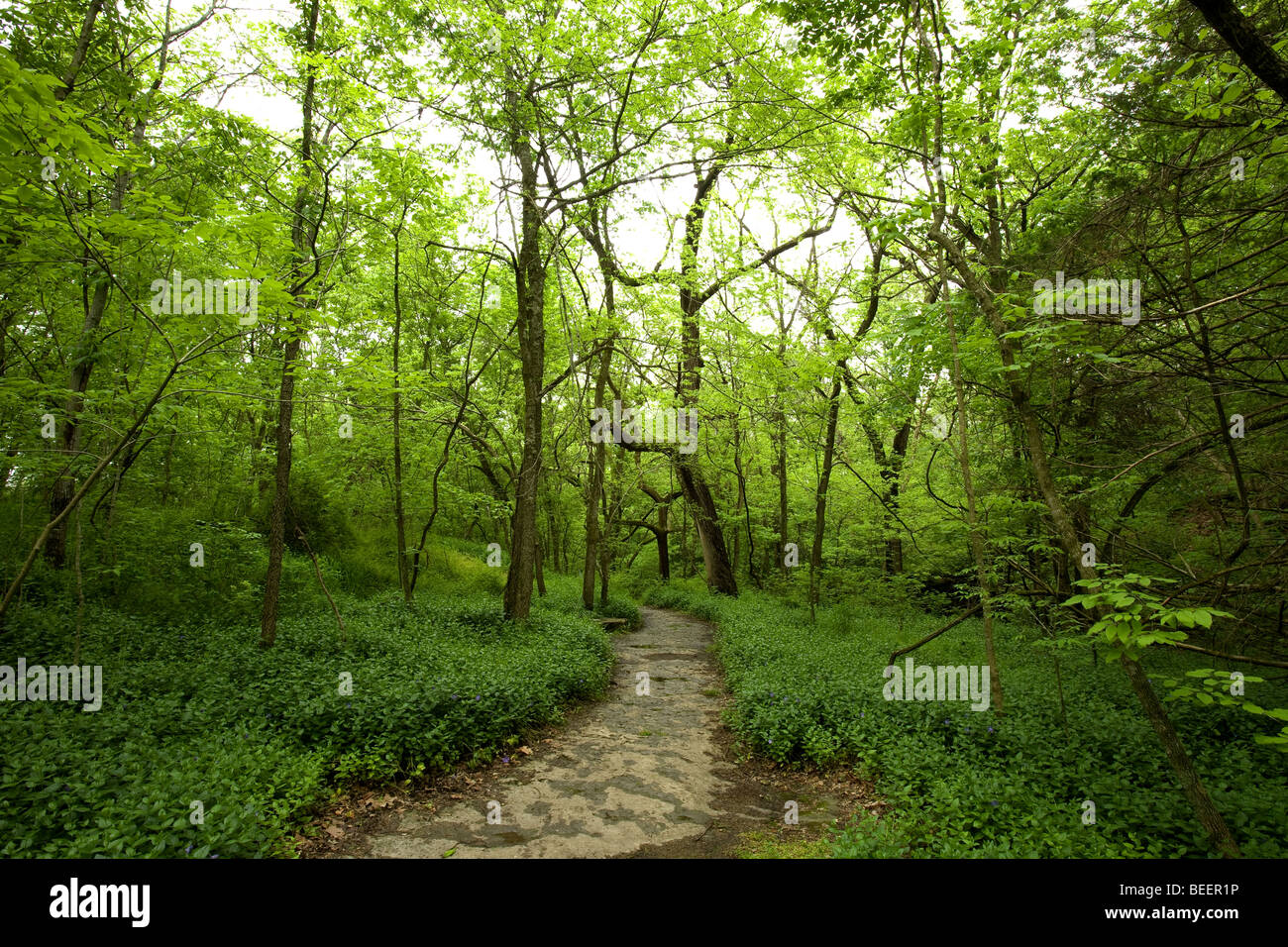 A view of a natural stone pathway at the Tanyard Creek Walking Trail in Bella Vista, Ark. Stock Photo