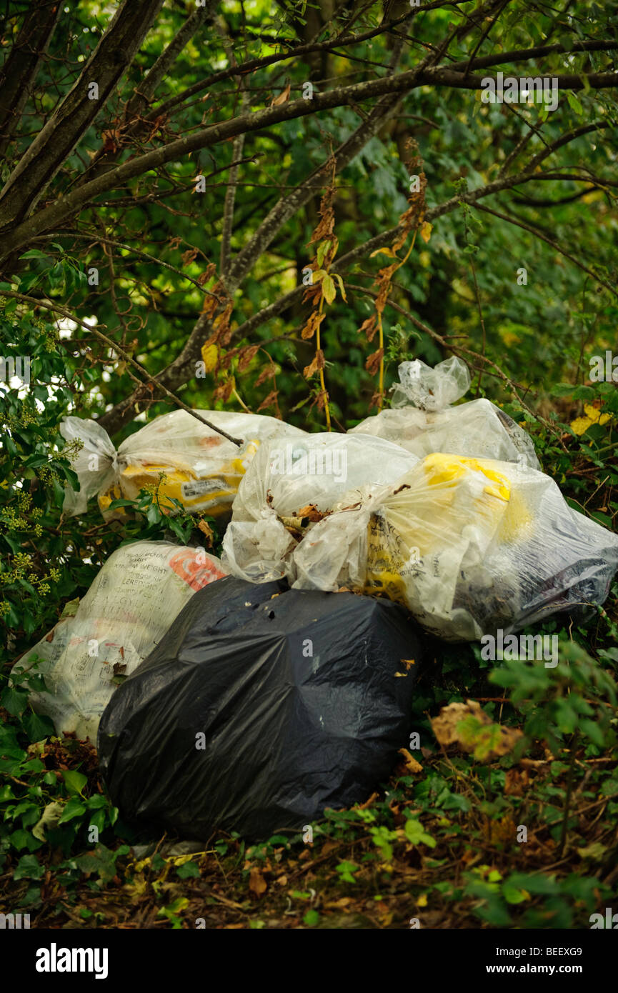 Plastic bags of domestic rubbish illegally fly-tipped in undergrowth woodland countryside, Wales UK Stock Photo