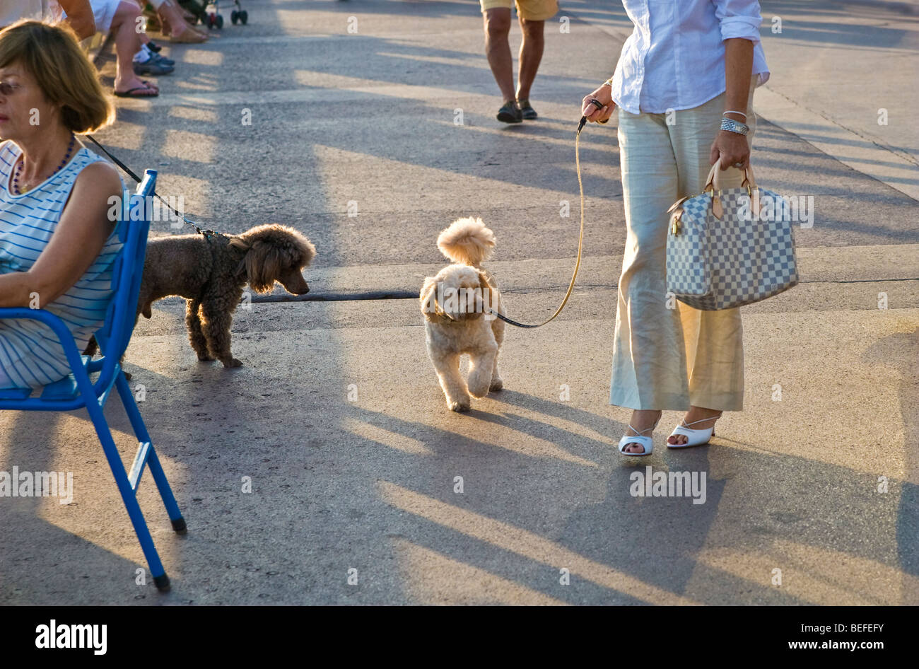 Cannes, France promenade, women with their pet dogs - Stock Image