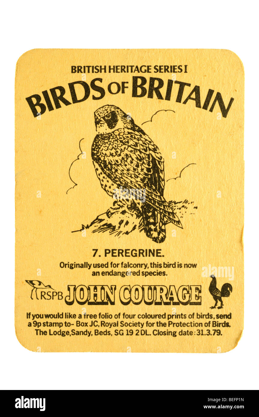 british heritage series 1 birds of britain 7. peregrine rspb john courage - Stock Image