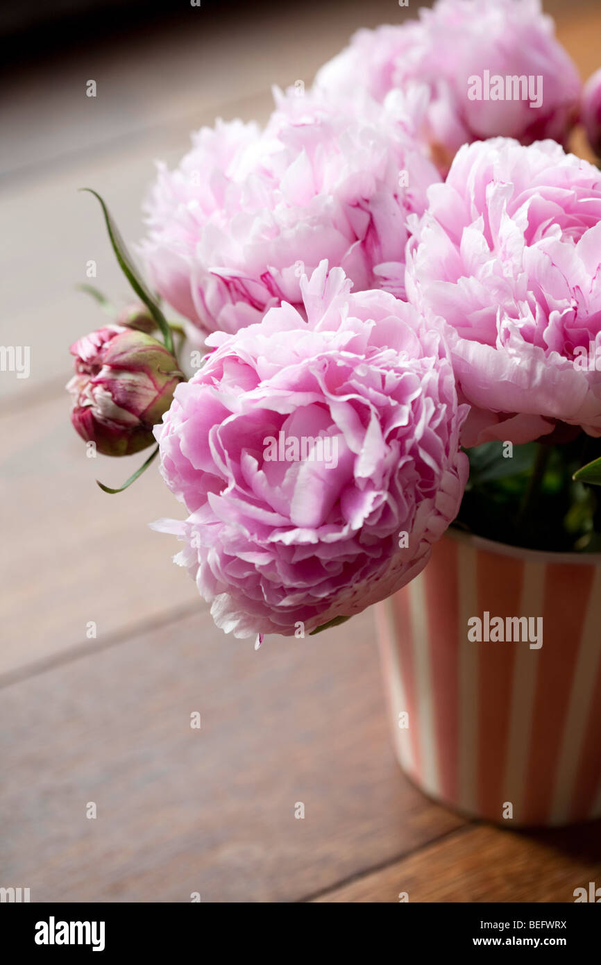 Peonies FLOWERS - Stock Image