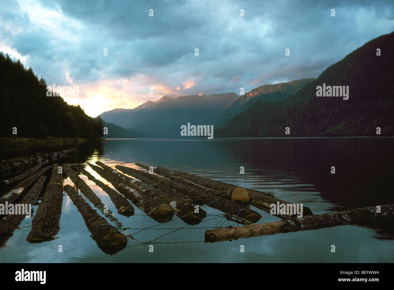 Khutzeymateen Inlet, Northern BC, British Columbia, Canada - Log Boom Floating on the Pacific Ocean - Stock Image