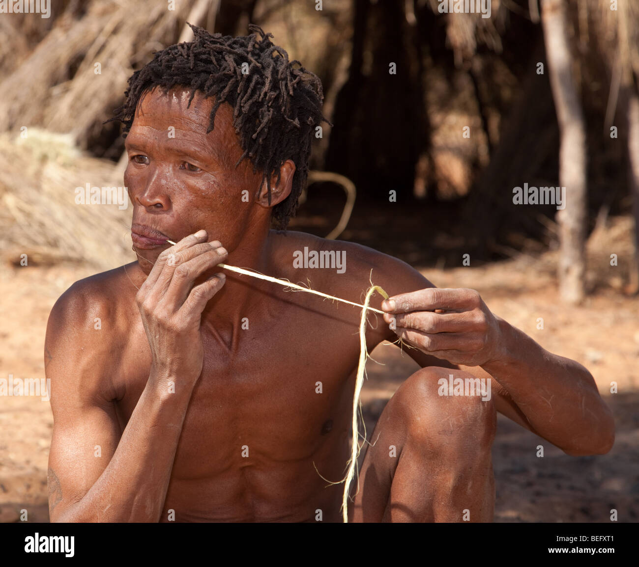 San Village. Manufacturing a bow and arrow the traditional way. Preparing the bow string. - Stock Image