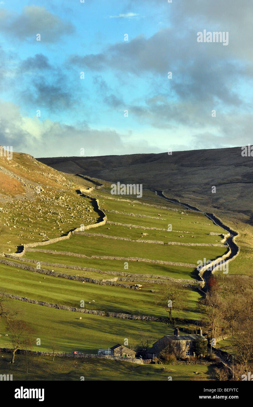 Limestone  walls,  Malham Dale, near Janet's Foss, Yorkshire Dales UK - Stock Image