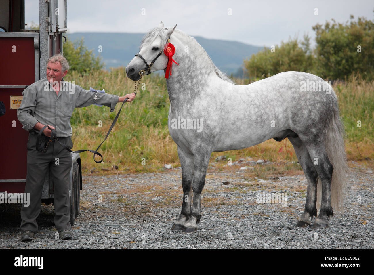 breeder with a Connemara Pony stallion at the Maam Cross Pony Show  in July 2008, Ireland - Stock Image