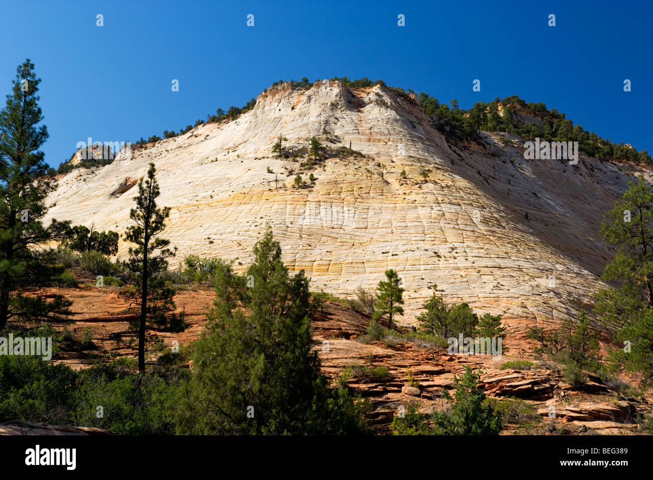 Checkerboard Mesa along Byway 9 in Zion National Park, Utah - Stock Image