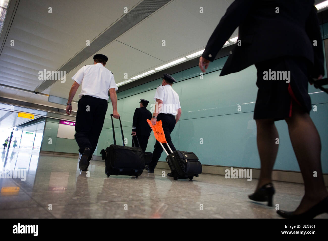 Arriving British Airways flight deck and cabin crew stride through arrivals after long-haul flight to Heathrow Airport's - Stock Image