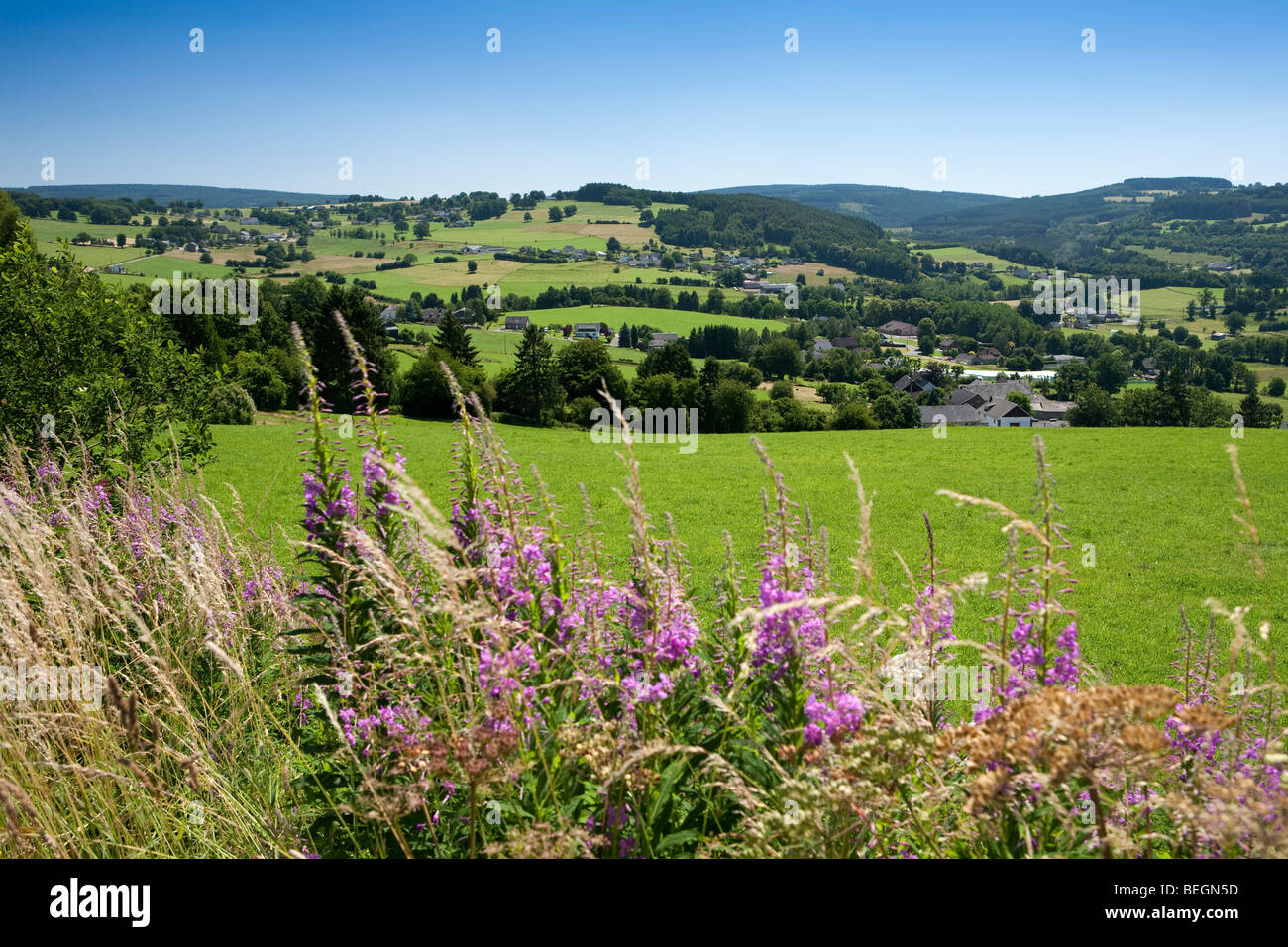 Rolling hills in the Ardennes forest near Malmedy. - Stock Image