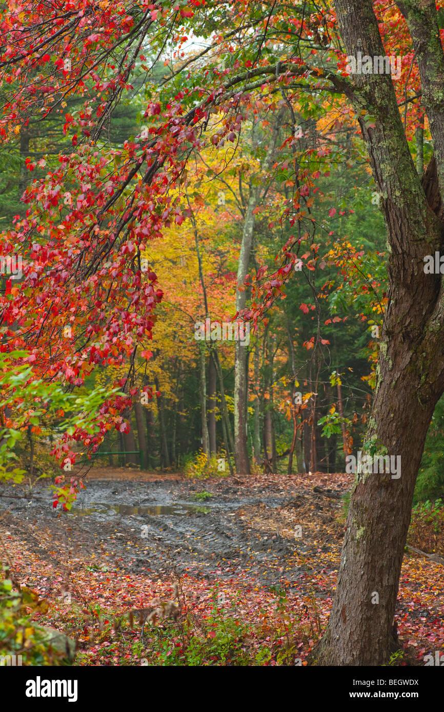 Harvard Forest: Petersham Massachusetts Stock Photos & Petersham
