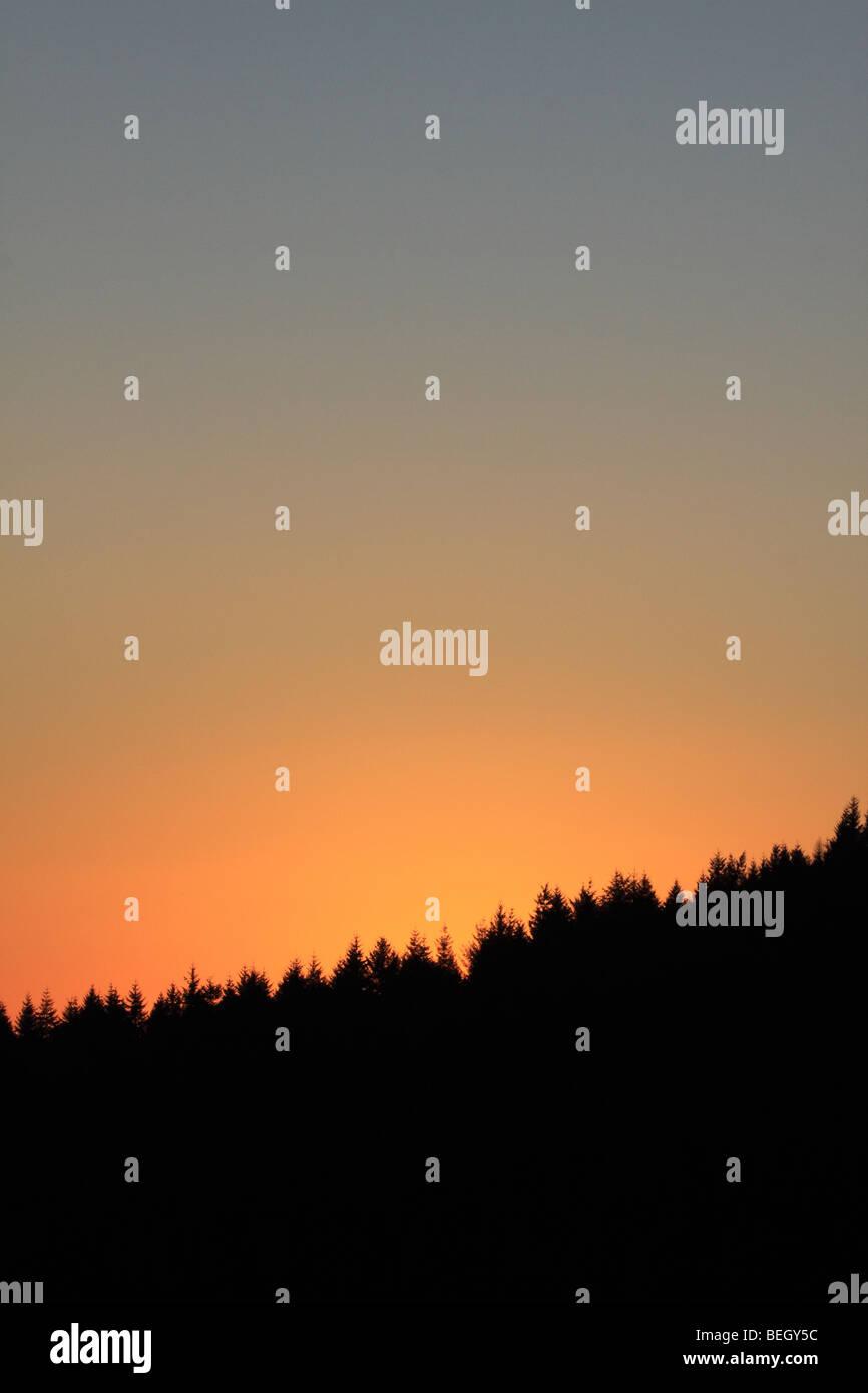 Conifer forest sunset, Shropshire, England UK Stock Photo