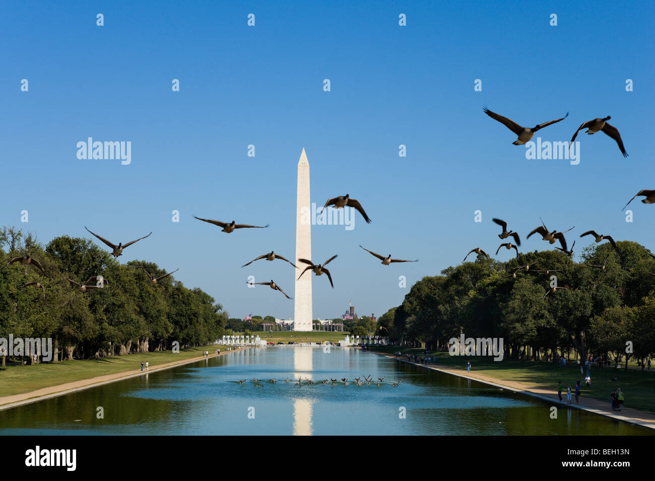 A flock of geese taking off from the Reflecting Pool with the Washington Monument behind, Washington DC, USA - Stock Image