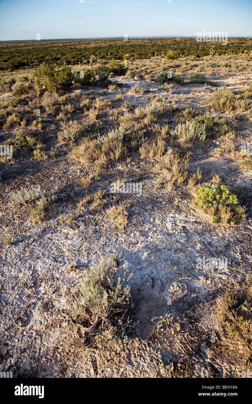 Desert scrub BLM land in New Mexico USA - Stock Image