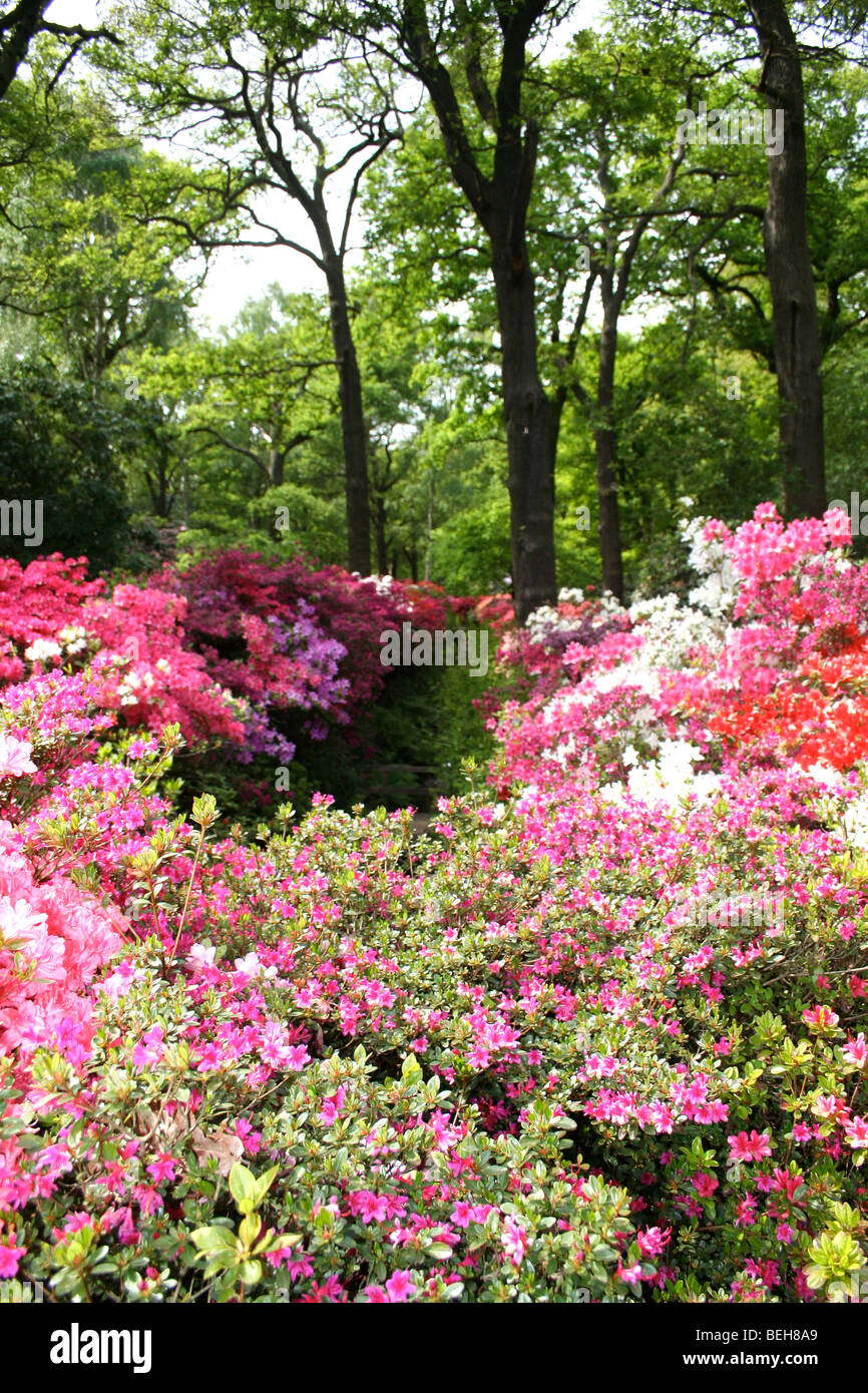 beautiful glade of flowers - Stock Image