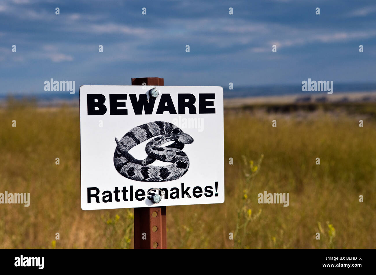 Beware rattlesnakes caution sign in the South Dakota mid-west grasslands - Stock Image