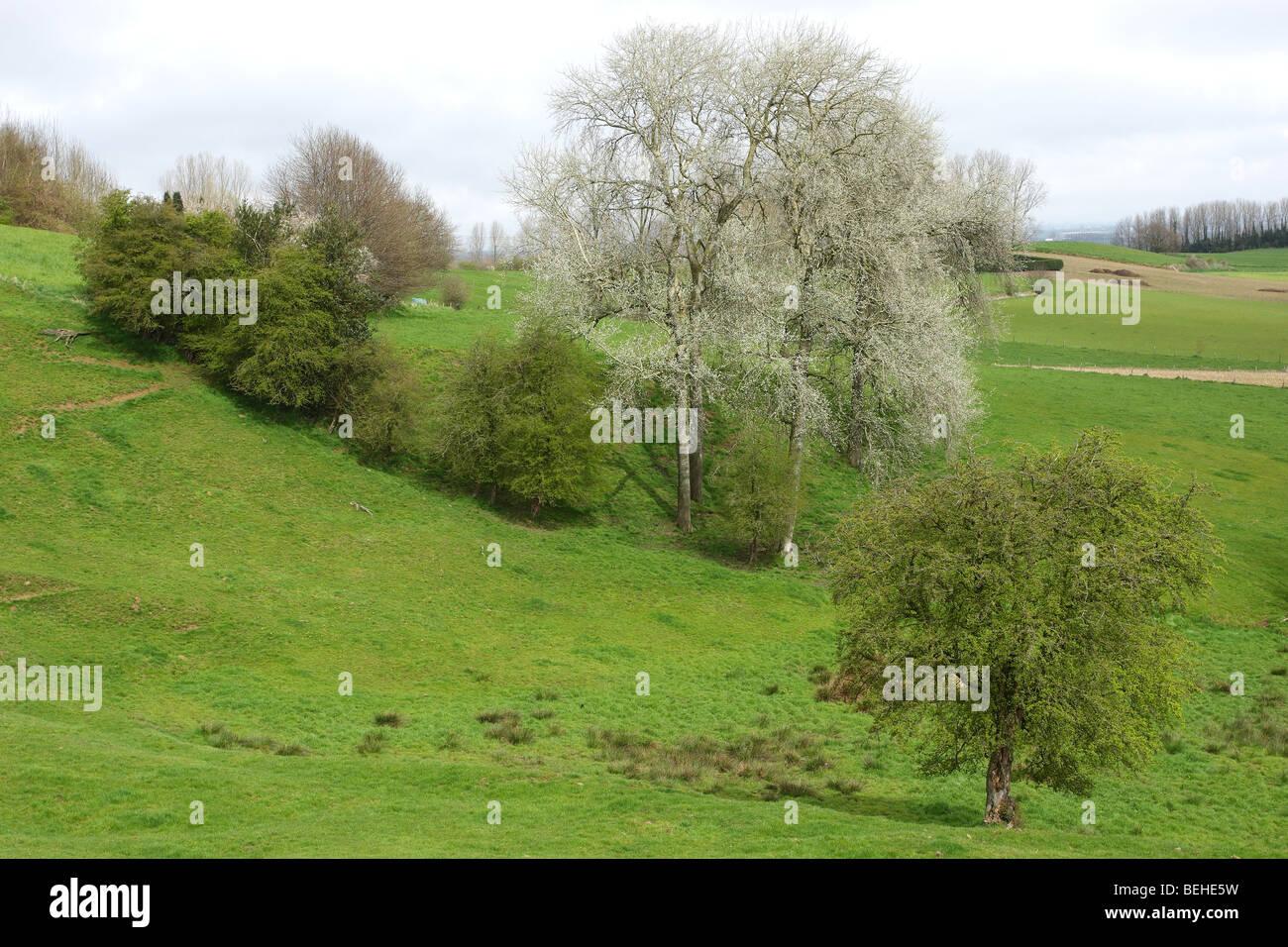 Bocage landscape with hedges and trees, Scherpenberg, Belgium - Stock Image
