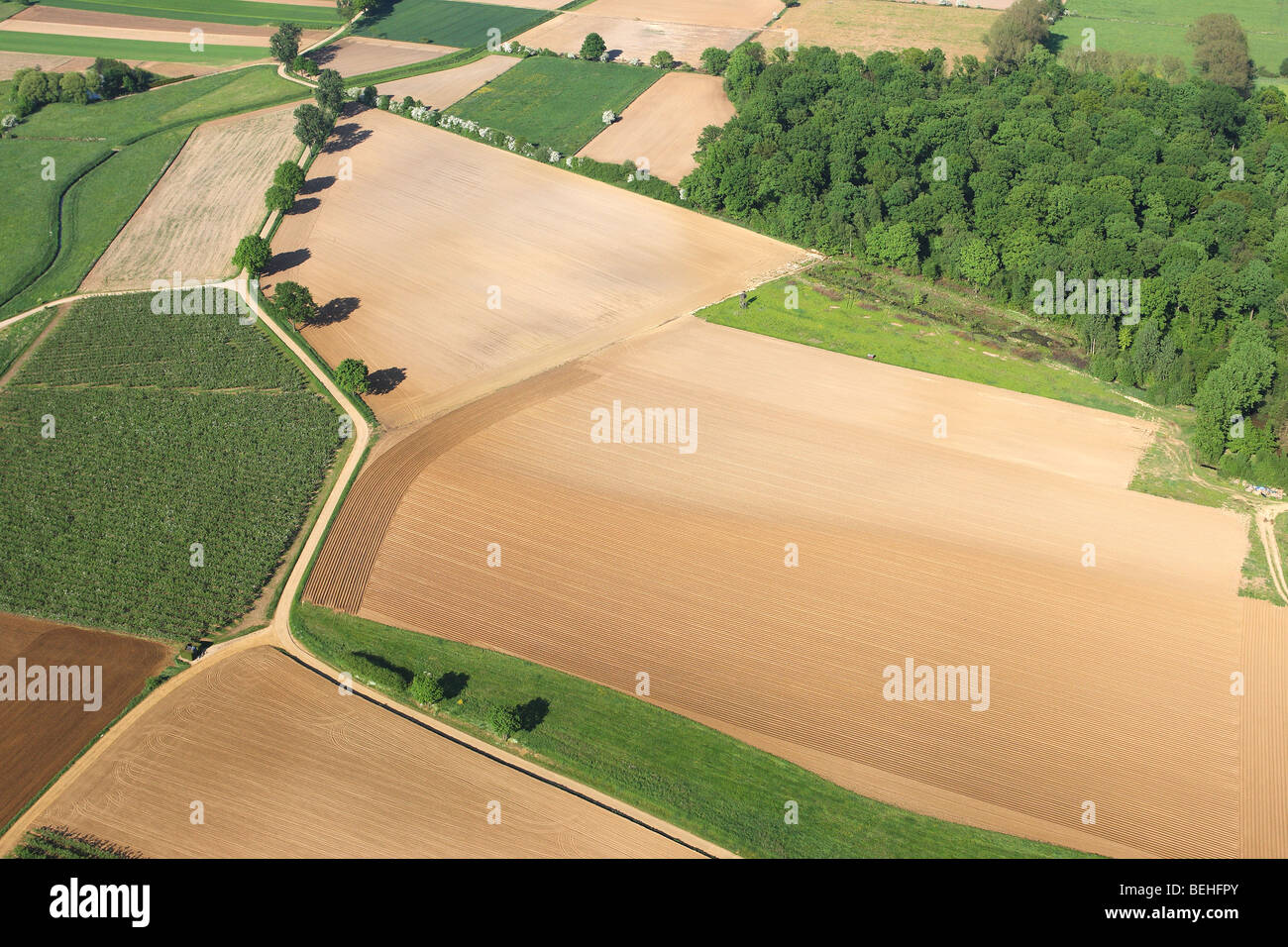 Row of trees and forest along path in fields and grasslands from the air, Belgium - Stock Image