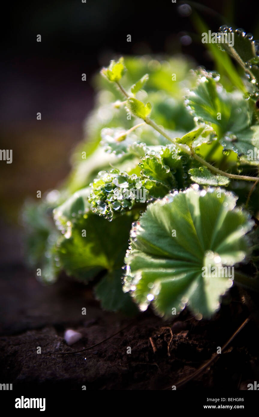 Early morning dew - Stock Image